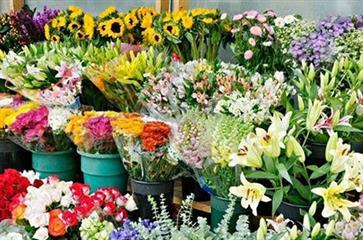 افزایش صادرات گل و گلاب و کاهش مشتری گلهای زینتی